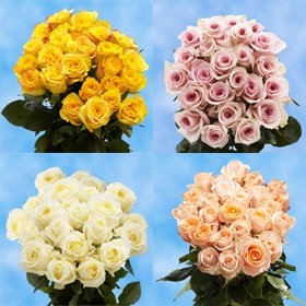 GlobalRose 50 Fresh Roses - Two Colors Long Stem Flowers- No Delivery Cost