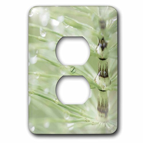3dRose Danita Delimont - Botanical - USA, Washington State, Seabeck. Blurred delicate horsetail plant. - Light Switch Covers - 2 plug outlet cover (lsp_260437_6)