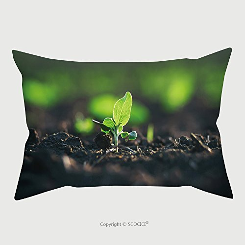 Custom Microfiber Pillowcase Protector Crops Planted In Rich Soil Get Ripe Under Sun Plants Grain Sprout Grow In Black Dirt Cultivated 597823286 Pillow Case Covers Decorative