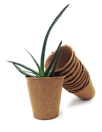 Buy biodegradable pots for seedlings
