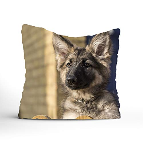 - 400-Thread-CountAnimal German Shepherd Dog Puppy Baby Muzzle Cotton Sateen Hotel Stitch Sham - Standard, Navy 18