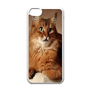 IPhone 5C Case Red Cat Sitting on Armchair, [White]