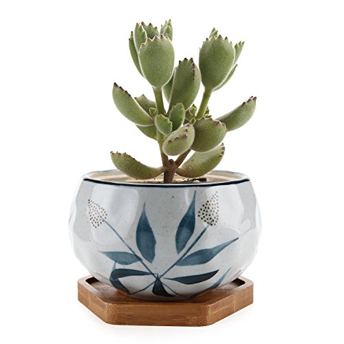 T4U Japanese Style 4.25'' Ceramic Bowl Shape Succulent Plant Pot with Bamboo Tray - Bulrush Pattern by T4U