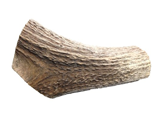 QT Dog All Natural Chew Toy, Monster