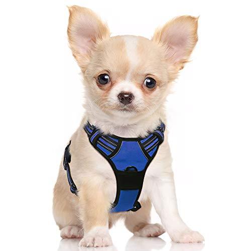 🥇 Productos para mascotas con labrador pelo corto