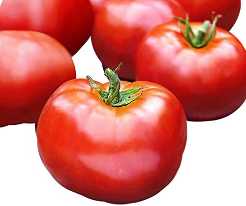 30+ ORGANICALLY GROWN Bonny Best Tomato Seeds