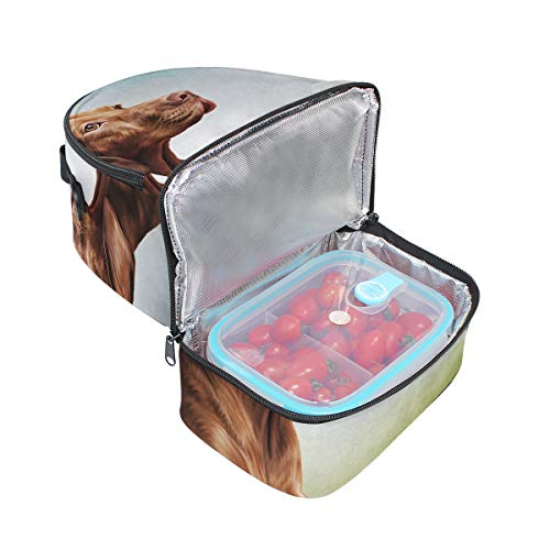 Top Carpenter Lunch Box Adult Lunch Bag Insulated Food Storage Containers Vizsla Pointer Dog Portrait Double Deck For Kids
