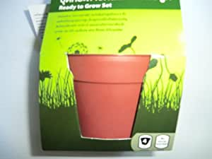 Ready To Grow Set Pot 4 inch