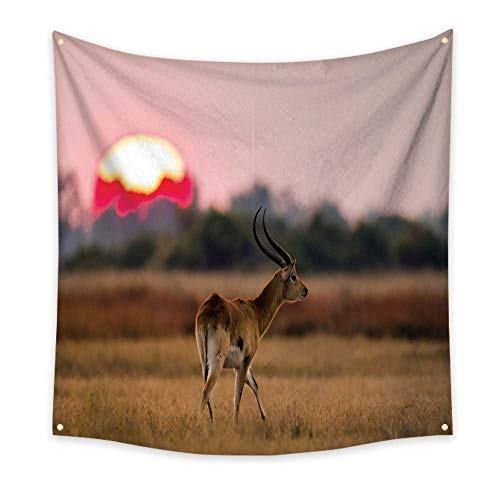 - Anyangeight Dormitory Tapestry Antelope Standing Against The Background of a Large of Sunrise Sun 55W x 55L Inch