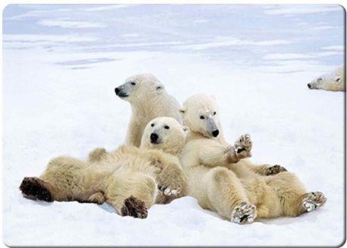 MAGNET Fridge Classic Polar bear playtime fridge magnet 3 1/2
