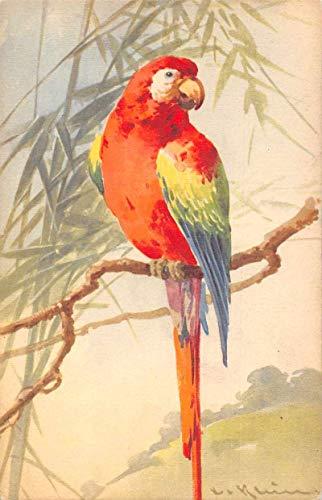 Macaw Parrot Bird Artist Signed Klein Antique Postcard J80445