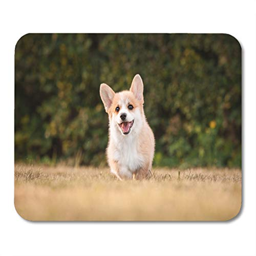 Boszina Mouse Pads Animal Yellow Garden Welsh Corgi Pembroke Puppy Playing in The Yard Active Autumn Mouse Pad for notebooks,Desktop Computers mats 9.5