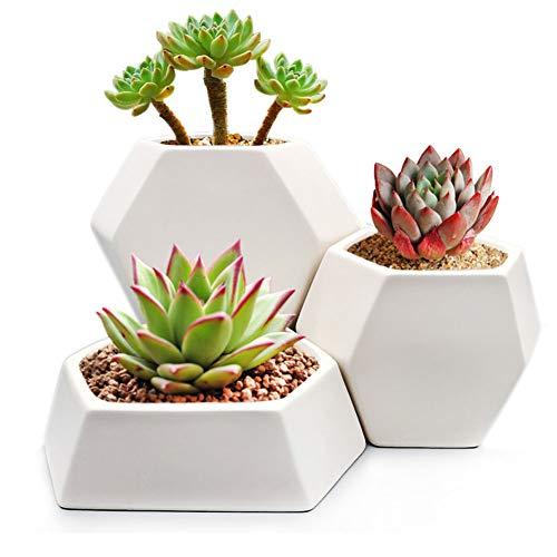 Modern Ceramic Geometric Planter ( 3 Pack-White) Hexagon Succulent Plant Pot/Cactus Flower Pot/Container by GSC