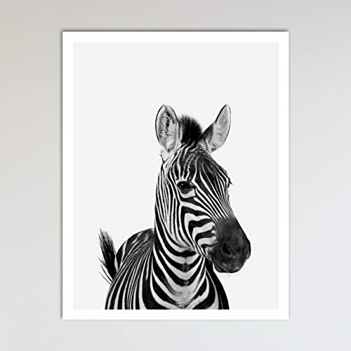 (Zebra Zoo Animal Nursery Print - Animal Prints - Neutral Wall Decor, Baby Shower Gift & Kids Bedroom Animal Wall Decor, 11 x 14 inches -)