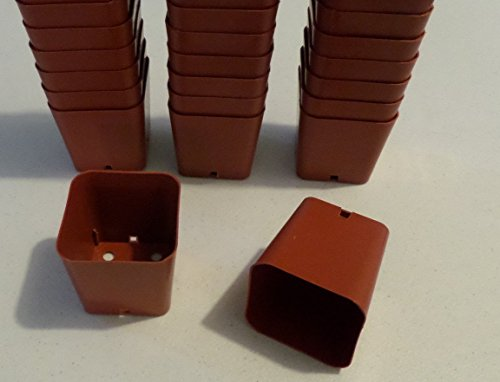 1000 Seed Starting 2'' square Durable Reusable Plastic Pots by Gardenstuff