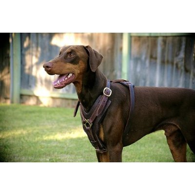 Dean and Tyler The Victory with Handle Dog Harness, Brown, Medium - Fits Girth Size: 23-Inch to 34-Inch by Dean & Tyler (Image #1)
