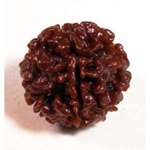 - AJ Retail 100% Natural 1 Mukhi IGL Certified 20-25 MM Rudraksha Round Bead Form Nepal