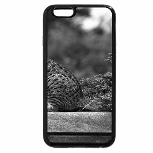 iPhone 6S Case, iPhone 6 Case (Black & White) - Incredibly beautiful cat