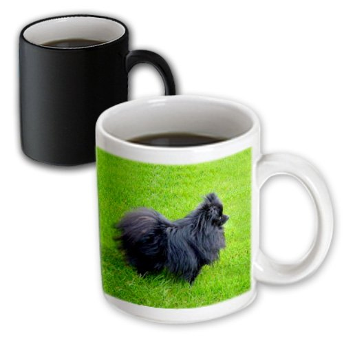 3dRose mug_939_3 Black Pomeranian Magic Transforming Mug,...