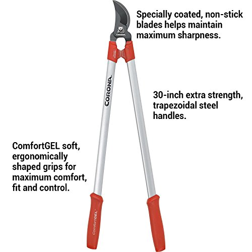 Buy pruners and loppers