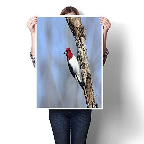 bybyhome Canvas Wall Art Red-Headed Woodpecker melanerpes erythrocephalus Decorative Fine Art Canvas Print Poster K 16