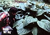 Mr. BIG Hosta Plant - THE WORLD'S LARGEST HOSTA! - Shade