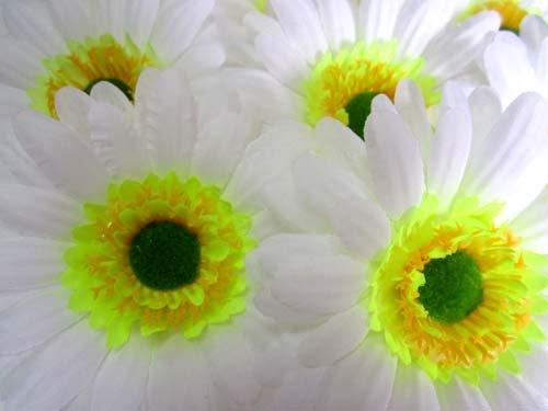 50 Big Silk White Gerbera Daisy Flower Heads Gerber Daisies 35