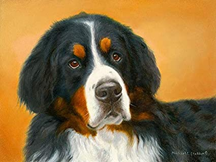 Amazoncom Michael Steddum Bernese Mountain Dog Oil Study