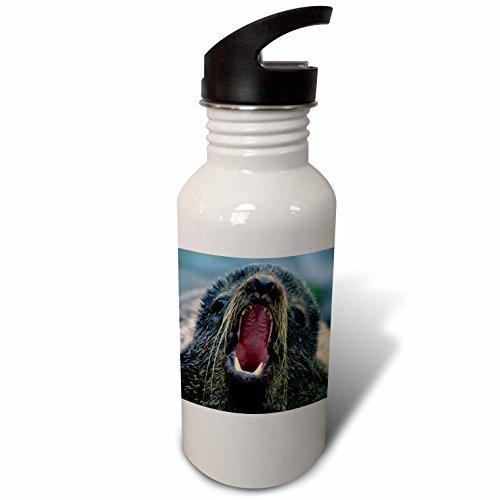 3dRose Danita Delimont - Seals - Northern Fur Seal, Callorhinus ursinus, California, USA - Flip Straw 21oz Water Bottle (wb_259037_2) - Northern Fur Seal