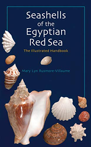 Seashells of the Egyptian Red Sea: The Illustrated Handbook (Egyptian 900)