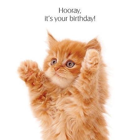 Big Hug Ginger Kitten Birthday Card Amazon Kitchen Home