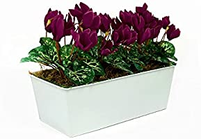 Artificial Red Cyclamen Flowers Window Box White Tin Planter 45cm