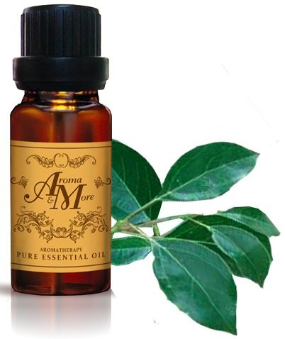 Tangerine 1 Ounce Alcohol (Camphor Pure Essential Oil 100% (China) (Ho Wood) (Cinnamomum camphora) 10 ml (1/3 Fl Oz)-Health)
