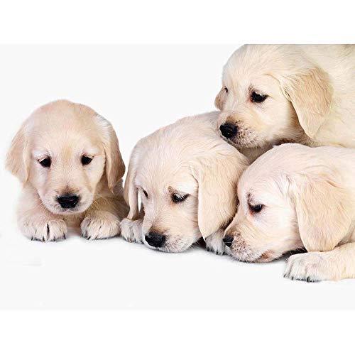 - Wee Blue Coo Puppys Baby Golden Retriever Dogs Pets Unframed Wall Art Print Poster Home Decor Premium