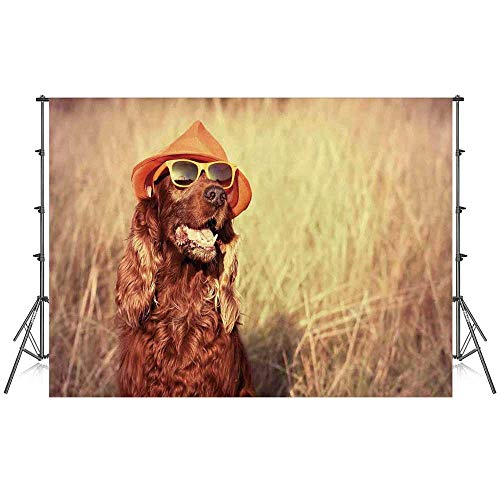 Animal Decor Stylish Backdrop,Funny Retro Irish Setter Dog Wearing Hat and Sunglasses Humor Joy Picture for Photography Festival Decoration,86''W x 59''H