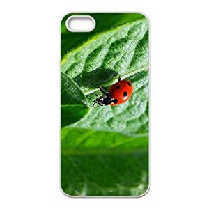 The Love For You Hight Quality Plastic Case for Iphone 5s
