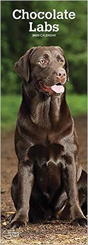 Télécharger Chocolate Labradors 2020 Slimline Calendar gratuit de livres en PDF