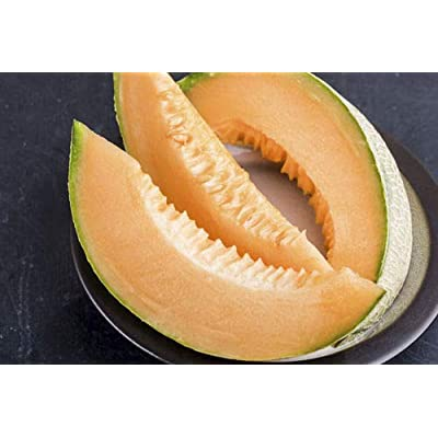 F1 Hybrid Tasty Bites Cantaloupe 25 Seeds by AchmadAnam : Garden & Outdoor