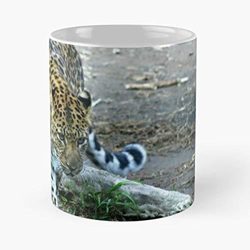 Santa Barbara Leopard Amur - 11 Oz Coffee Mugs Ceramic The Best Gift For Holidays, Item Use - Barbara Santa Stripes