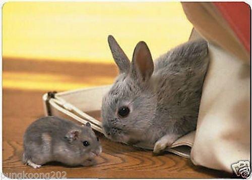 (Rat and rabbit fridge magnet 3