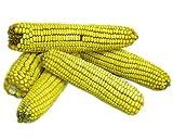 Ear Corn, 25 lbs.