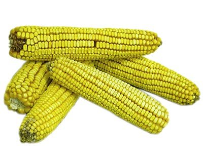 Ear Corn, 25 lbs. - Squirrel Ear Corn Holder