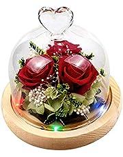 زهرة الورود المحفوظة في قبة زجاجية مع أضواء زينة رومانسية هدية لعيد الحب وأعياد الميلاد (بدون بطارية) من OSALADI