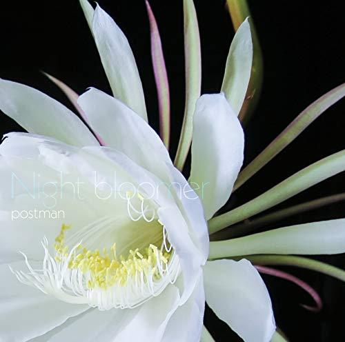 Night bloomer