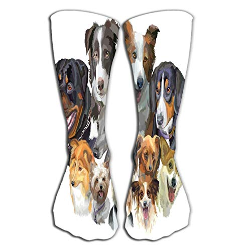 - zengjiansm Outdoor Sports Men Women High Socks Stocking Set Portraits Dog Breeds Rottweiler Border Collie Toy Terrier Papillon Pembroke Welsh Corgi Sheltie Yorkshire Tile Length 19.7