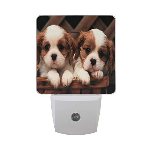 Night Light Cavalier King Charles Spaniel Puppies Led Light Lamp for Hallway, Kitchen, Bathroom, Bedroom, Stairs, DaylightWhite, Bedroom, Compact