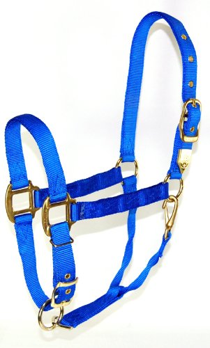 Hamilton Adjustable Chin Halter - Hamilton 1-Inch Nylon Halter with Adjustable Chin, Blue - Large Size