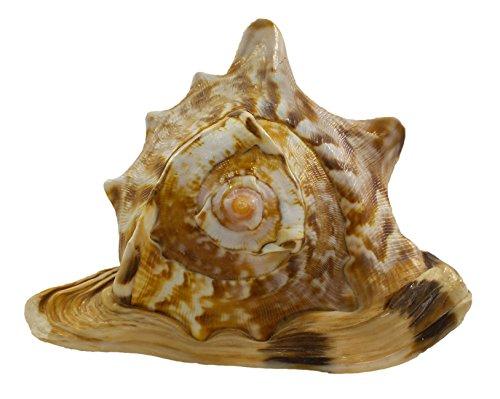 "U.S. Shell King Helmet, 4 to 5"""