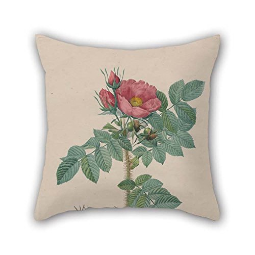 Oil Painting Chapuy, After Pierre- Joseph Redout?? - Kamtschatka Rose (Rosa Kamtschatica), From Redout??, ' Les Roses', Paris, 1817?1824) Throw Cushion Covers 18 X 18 Inches / 45 By 45 Cm For Her -