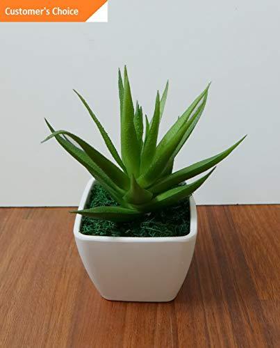 Hebel Mini Plants with Pot unkillable Artificial Desert Grass Restaurant Office Decor   Model ARTFCL - 325  ]()